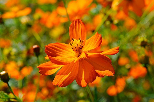 un fiore arancione
