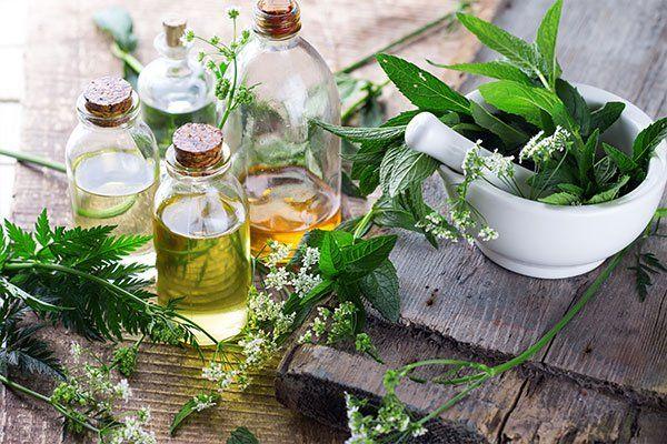 un vaso con una pianta dei rametti di erbe e dei barattoli in vetro con degli olii essenziali