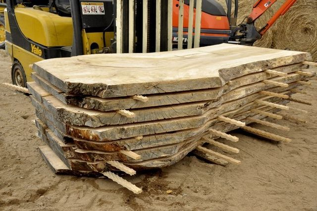 Spalted Maple live edge slabs ready to be dried.