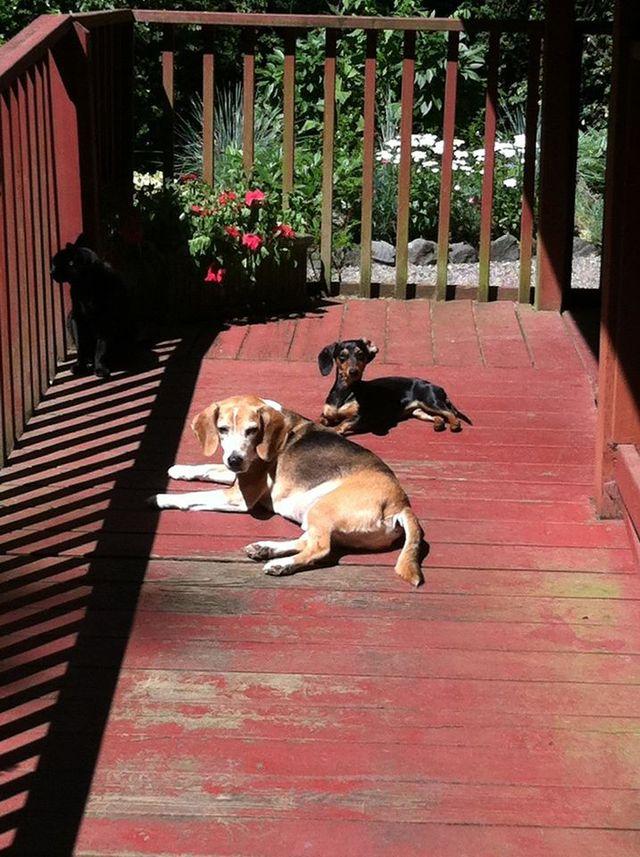 Dog Boarding Kennels Gig Harbor