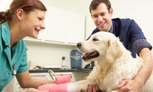Veterinary treating dog