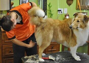 Pet Salon | Virginia Beach, VA | Blue Ribbon Pet Salon