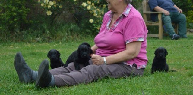 Lindcoly Dog Breeders Dog breeding & puppies for sale