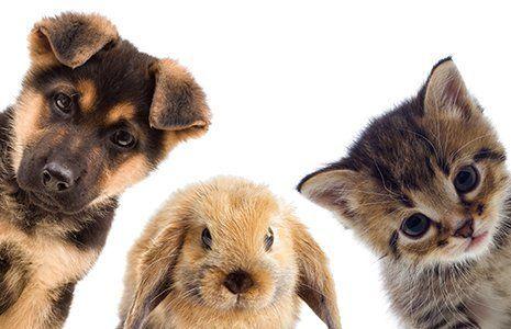 gruppo cuccioli cane coniglio gatto