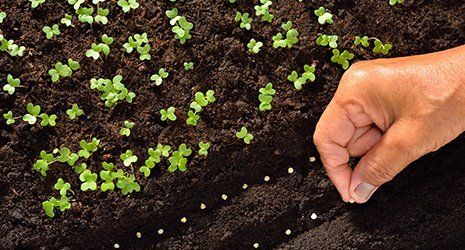 germogli che nascono da un pezzo di terra con una mano che ne semina altri