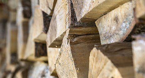 mucchio di legna