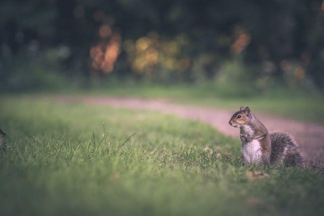 Squirrel removal company Massachusetts